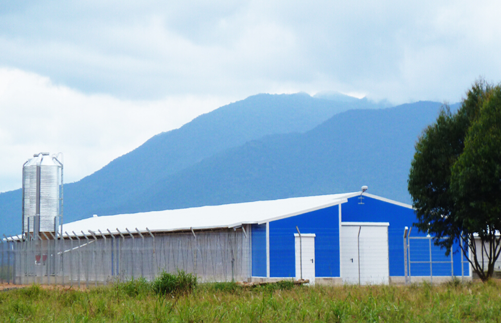 Poultry Farm Construction : Poultry farming shed china house chicken